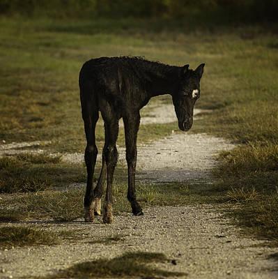 Damp Cracker Foal Art Print by Lynn Palmer