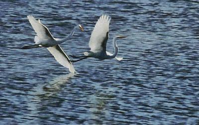 Great White Egrets Digital Art - Dance Of The Egrets Painterly by Ernie Echols