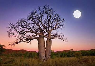Baobab Photograph - Dancing Boabs Kununurra by Julie Fletcher