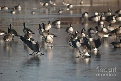 Photograph - Dancing Geese by Mark McReynolds