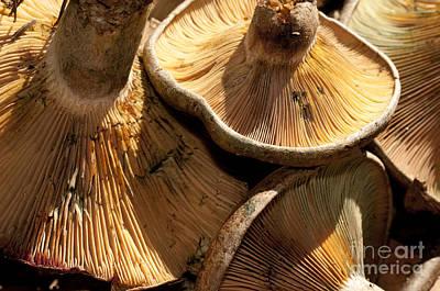 Photograph - Dancing Mushrooms by Wilma  Birdwell