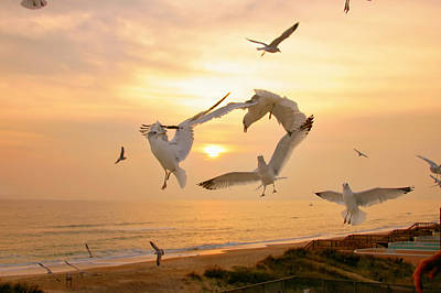 Photograph - Dancing Seagulls by Mary Almond