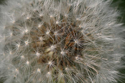 Art Print featuring the photograph Dandelion Fairy Seeds by Peg Toliver