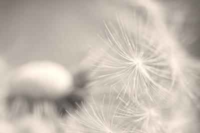 Dandelion Flower Art Print by Ceca Photography