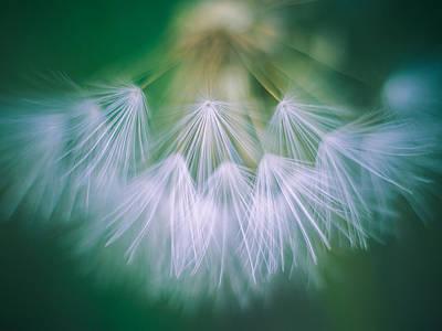 Photograph - Dandelion I by Alexander Kunz