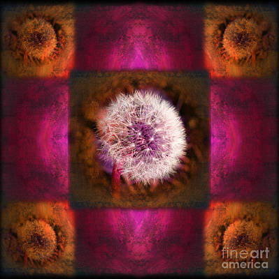 Photograph - Dandelion In Flame by Laura Iverson