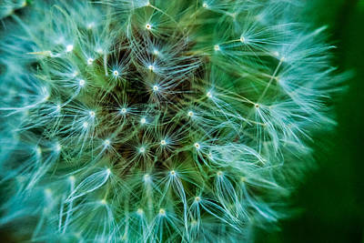 Dandelion Puff-green Art Print by Toma Caul