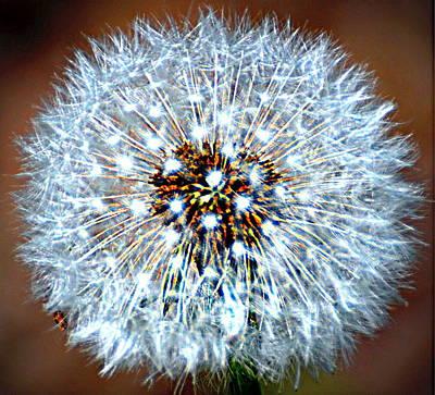 Dandelion Seed Art Print by Marty Koch