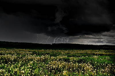 Photograph - Dandelion Strikes by Emily Stauring