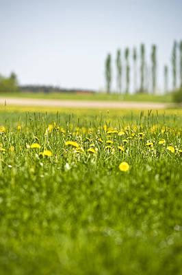 Dandelions Growing In Meadow Art Print by Stock4b-rf