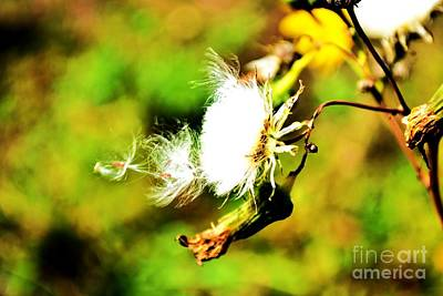 Photograph - Dandilion In The Wind by Justine Gersich