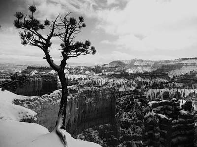 Photograph - Dan's Eye View Of Bryce by Stephen Bartholomew