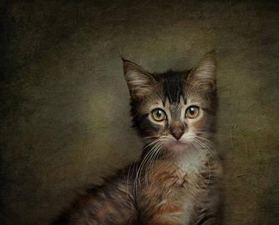 Photograph - Daphne by Pat Abbott