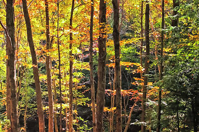 Photograph - Dappled Sun On Fall Colors by Albert Seger