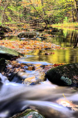 Photograph - Dappled Two by JC Findley