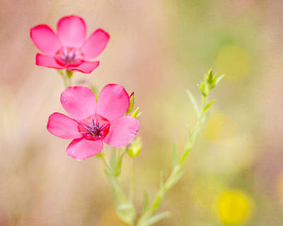 Texas Wildflowers Photograph - Dare To Dream by Joel Olives