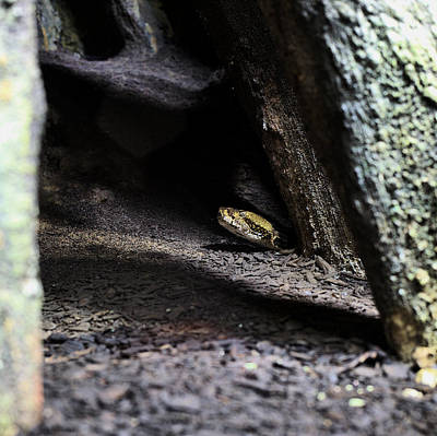 Rattle Snake Photograph - Dark And Dangerous Places by JC Findley