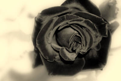 Art Print featuring the photograph Dark Beauty by Kay Novy