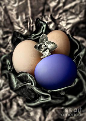 Photograph - Dark Blue Easter Egg by Danuta Bennett