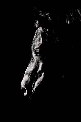 Horse Photograph - Dark Contemplation by Emily Stauring