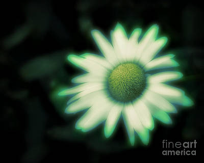 Abstract Animalia - Dark Daisy by Perry Webster