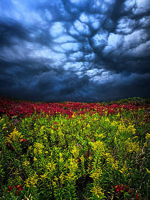 Dark Mood Art Print by Phil Koch