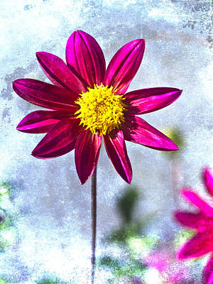 Striking Photograph - Dark Pink Dahlia On Blue by Carol Leigh