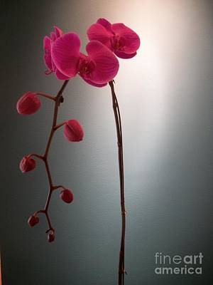 Photograph - Dark Pink Orchids by Mary Mikawoz