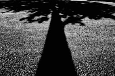 Photograph - Dark Shadow by Lynnette Johns