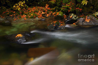 Skate Creek Photograph - Dark Water Autumn by Mike  Dawson