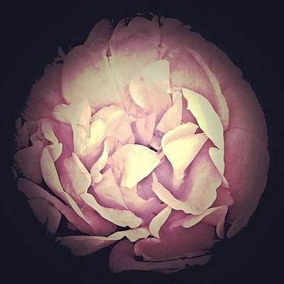 Florals Photograph - Darkflower by Inna Jasons