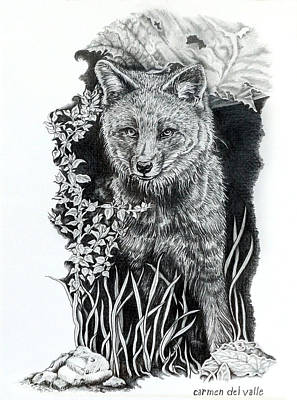 Drawing - Darwin's Fox by Carmen Del Valle