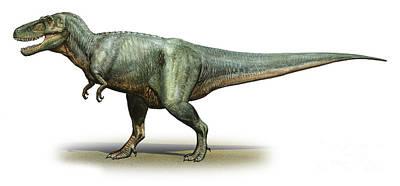 Animal Paintings David Stribbling - Daspletosaurus Torosus, A Prehistoric by Sergey Krasovskiy