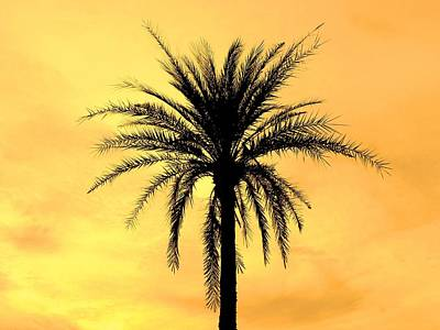 Date Palm Original