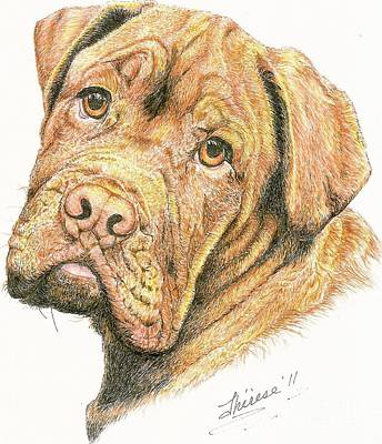 Drawing - Dawg by Bill Hubbard
