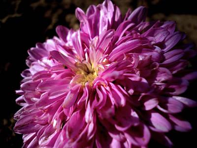 Photograph - Dawn Flower by Sumit Mehndiratta