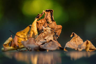 Photograph - Dawn Leaves by Gene Hilton
