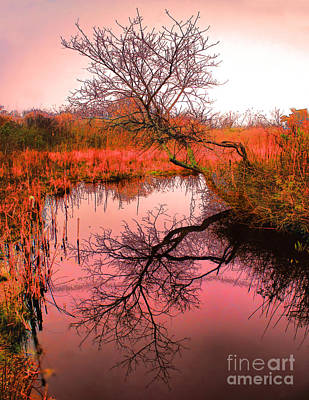 Dawn On The Marsh Art Print by Nick Zelinsky