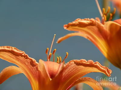 Day Lilies Art Print by Christine Stack