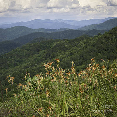 Photograph - Day Lilies On The Mountain by David Waldrop