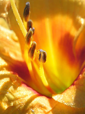 Photograph - Day Lily Dew by Francesa Miller