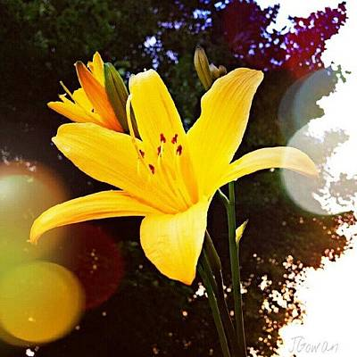 Lilies Wall Art - Photograph - Day Lily II. #daylily #lily #flowers by Jess Gowan