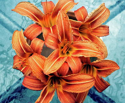 Day Lilies Photograph - Day Lily by Image By Emeraldnicola