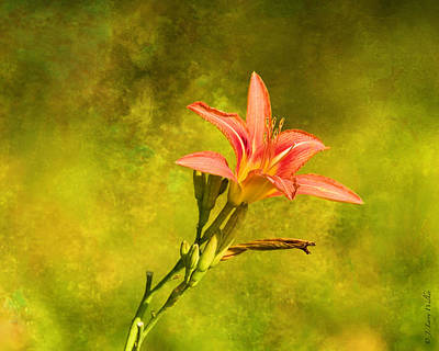 Daylily All Alone Art Print by J Larry Walker