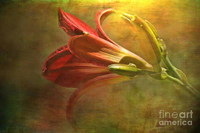 Daylily Photoart With Texture II  Art Print by Debbie Portwood