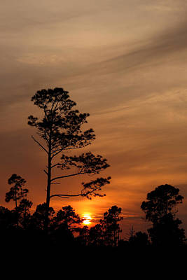 Art Print featuring the photograph Days Dusk by Cindy Haggerty