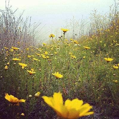 Daisies Photograph - Day's Ease by Scott Freeman