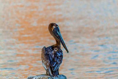 Photograph - Days End Pelican by Shannon Harrington