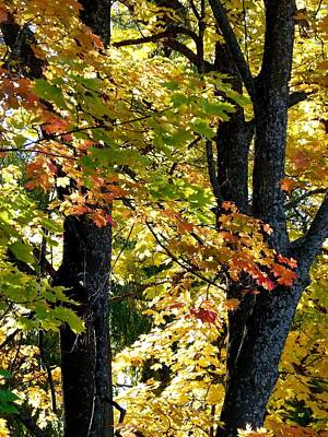Dazzling Days Photograph - Dazzling Days Of Autumn by Will Borden