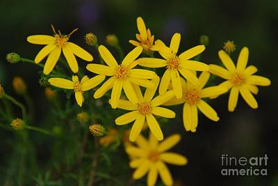Art Print featuring the photograph Dbg 041012-0281 by Tam Ryan